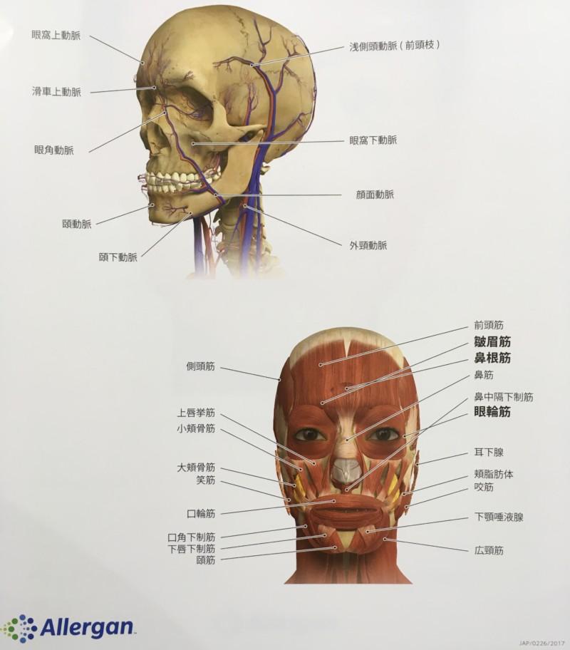 肌深部〜骨格